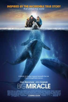 O Grande Milagre - Big Miracle Filmes Torrent Download capa