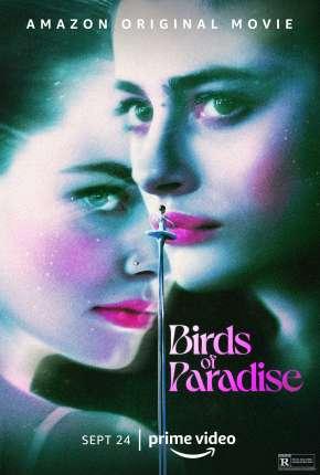 Pássaros de Liberdade Filmes Torrent Download capa