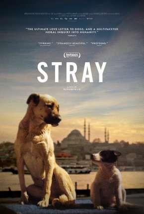 Stray - 2021 Legendado Filmes Torrent Download capa